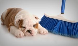 faxina-em-casa-com-cachorro-48747