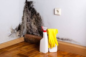 Como remover mofo e bolor das paredes