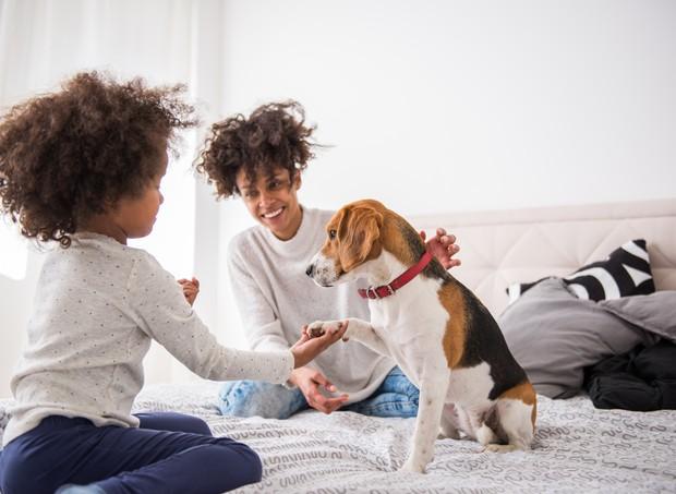 6 dicas para manter a casa sempre limpa e cheirosa (mesmo com pets)